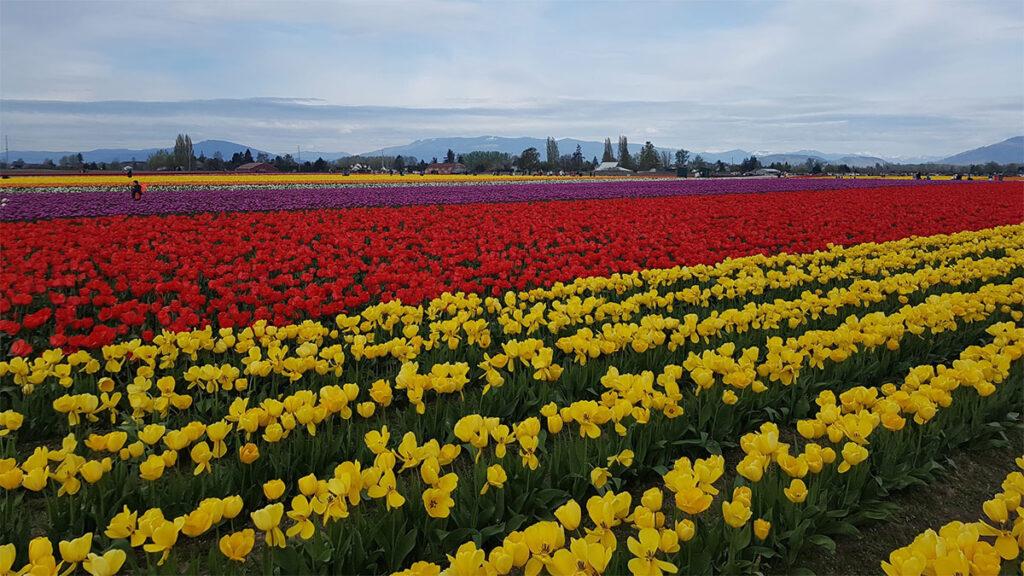 Skagit Valley, Washington
